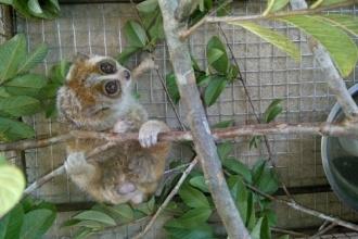 Vườn Quốc gia Phong Nha - Kẻ Bàng: Thả động vật hoang dã về môi trường tự nhiên